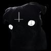 Pug Laceration