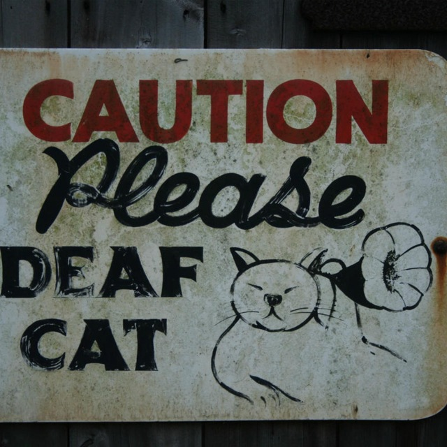 DeafCat
