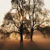 Hampshire Wood