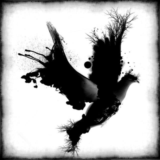 the black dove experiment