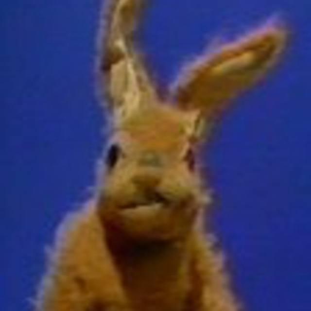 Hartley Hare